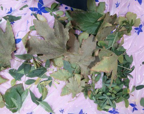 شکل سازی و خلاقیت با برگ ها